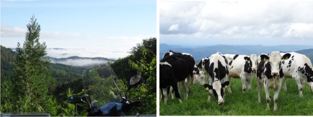 スーパーカブ110と葛巻の牛