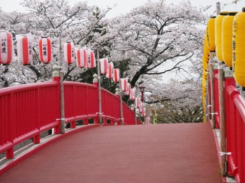桂城公園の桜祭り開催